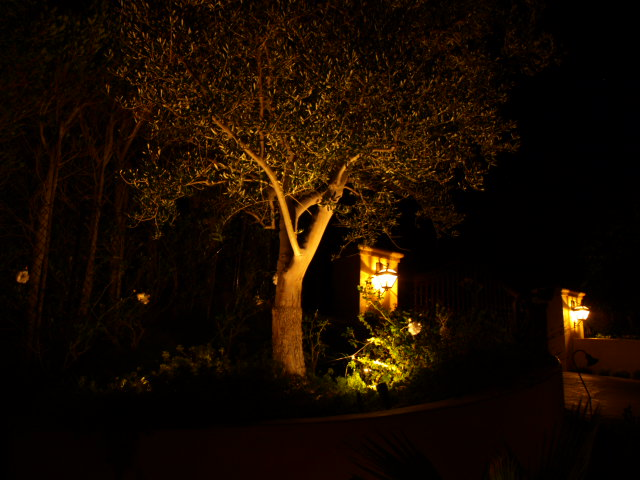 camarillo landscape lighting up trees