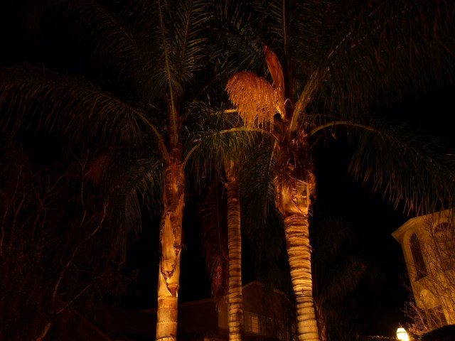camarillo landscape lighting